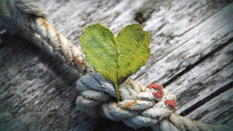 Благодарност и признателност. Как да осъзнаваме доброто, което ни се случва