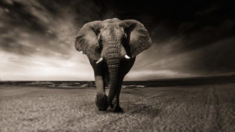 Лидерство: Накарайте слона да скача!