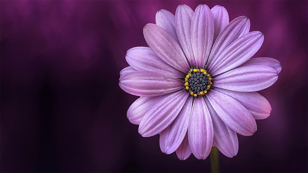 Оценяване на красотата и съвършенството. Как да виждаме и да ценим