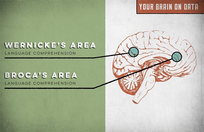 Как реагира мозъкът на факти