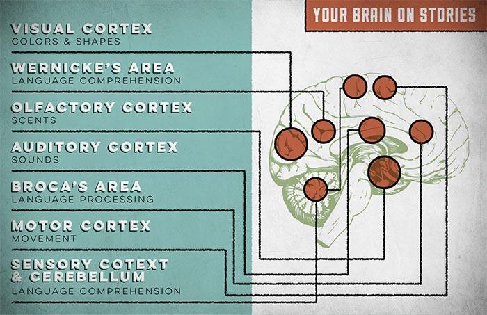 Как реагира мозъкът на истории