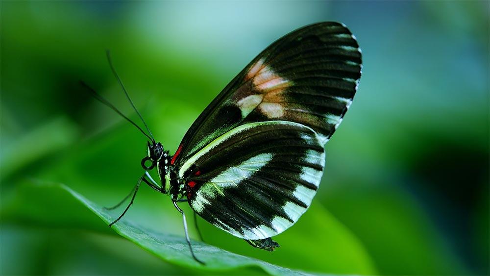 Трансформационно лидерство