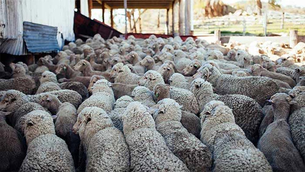 Във всяко стадо има мърша. Не го приемай лично!