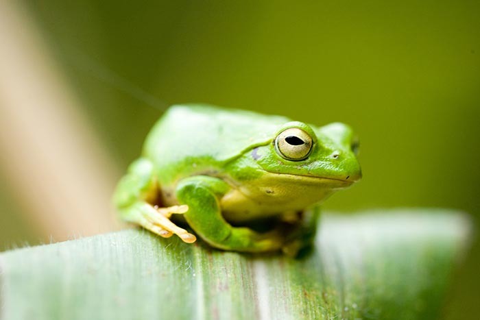 Жаби. Задача за съобразително мислене